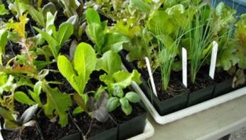 plant_sale.jpg1_ (1)