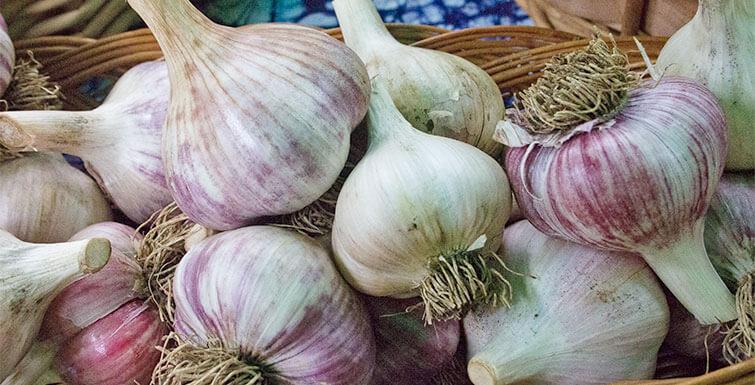 About-Garlic