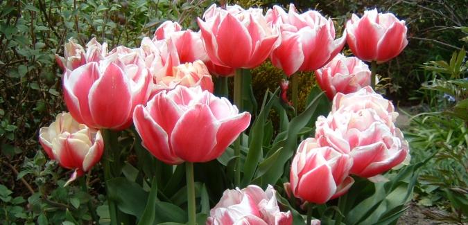10:00AM APRIL 7, 2018 TO 4:00PM APRIL 8, 2018 THE PLANT SHOPPE AT ROYAL ROADSUNIVERSITY